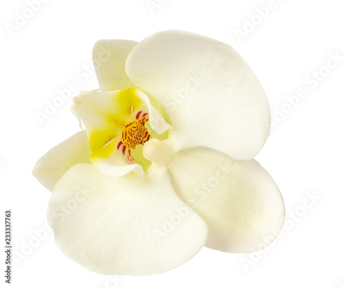 Biały storczykowy kwiat odizolowywający na bielu