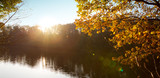 Colorful beech leaves on the sun and forest lake. - 233344759