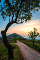 Sentiero di collina al tramonto sui Colli Euganei in Italia © ginoprio