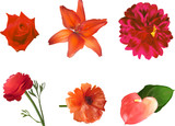 set of six red flowers isolated on white