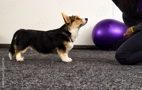 Poster puppy at a fitness class