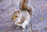 Squirrels - 233369778