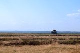 Dried feild landscape against blue sky during day © taira42