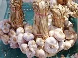 White garlic pile texture. Fresh garlic on market table closeup photo - 233386198