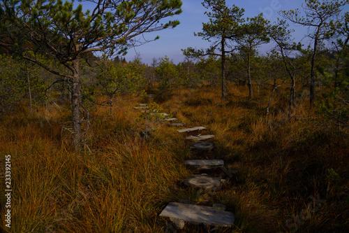 Foto Murales Nature autumn colors