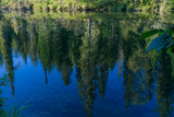 Pines reflected in the water - 233420525