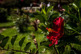 Flor roja - 233421703