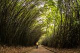tunel de Bambu © Reynaldo G. Lopes