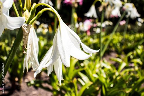Foto Murales Flor blanca en selva colombiana