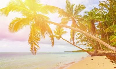 Beautiful tropical sand beach on island with coconut palm trees