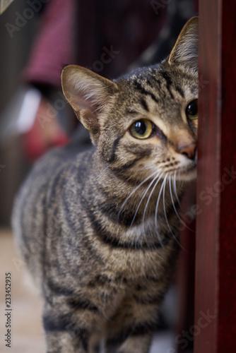 Piękny pasiasty szary kota odprowadzenie okno, salowym