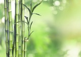 Many bamboo stalks on natural background, decoration plant.