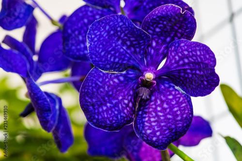 Orquideas - 233469930