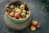 Apfelernte im Herbst  mit Apfelkorb