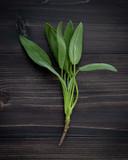 Closeup fresh sage leaves on dark wooden background. - 233503753
