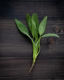 Closeup fresh sage leaves on dark wooden background. - 233503764