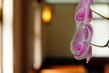 "Постер, картина, фотообои ""Beautiful orchid with vintage upholstery"""