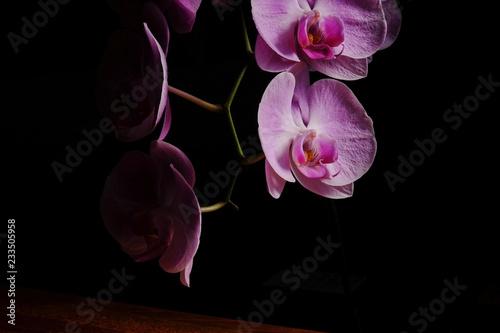 Zbliżenie piękna orchidea.
