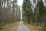 A bike path in a Kashubian forest - 233506366