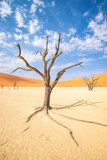 Deadvlei area in Namib desert - 233532122