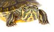 Closeup of a turtle