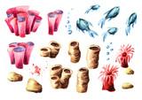 Corals set. Watercolor hand drawn illustration, isolated on white background