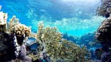 Tropical fish and coral reefs. A warm sea. Diving. - 233582920