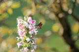 fotografias de insectos varios  - 233586182