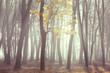 Bare late autumn forest, beautiful fall season background - 233592703