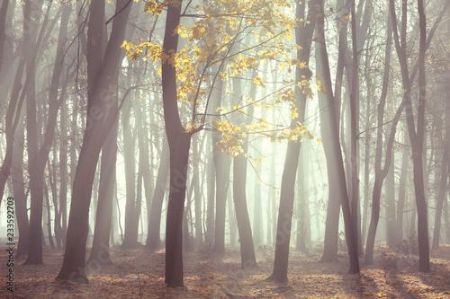 Bare late autumn forest, beautiful fall season background