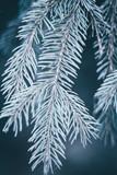 Christmas background. Green fir tree. - 233594981