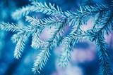 Christmas background. Green fir tree. - 233595105