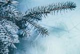 Christmas background. Green fir tree. - 233595708