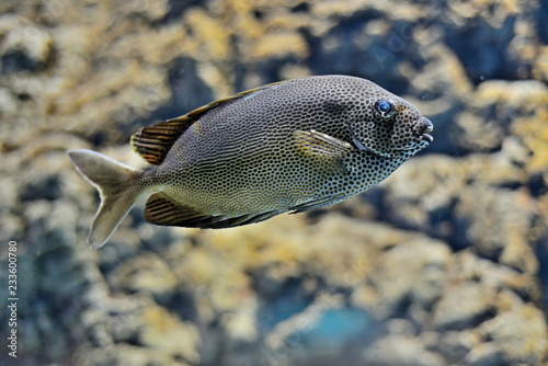 fototapeta na ścianę Exotic fish in a marine aquarium