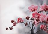 Kwitnące storczyki © mycatherina