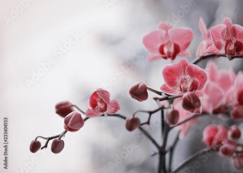 Zdjęcia na płótnie, fototapety na wymiar, obrazy na ścianę : Kwitnące storczyki