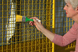 Female worker painting metal protective net to yellow color - 233605108