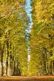 Allée d'arbres aux feuilles jaunies en automne