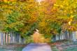 route bordée d'arbres en automne