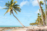 Palm tree beach in Brazil