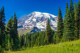 Looking up at Mt. Rainier in the distance in Mt. Rainier National Park.