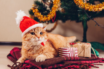 Red cat wears Santa's hat under Christmas tree. Christmas and New year concept