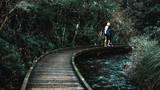 Boardwalk in the green nature.