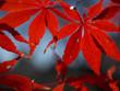 紅葉・秋の色彩饗宴