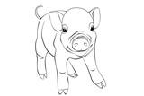 Pig © alex2400104