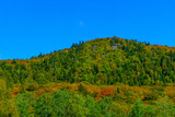 Forested hill in Mont Tremblant National Park