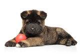 American Akita puppy with ball on white background