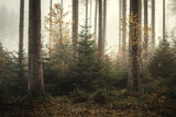 Nebel im Kaufunger Wald