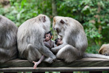 Monkey moms and their babies sit together. - 233715905