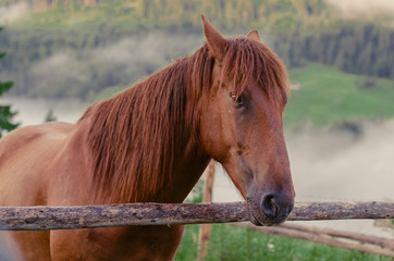 brown horse on a pasture alone in the mountains